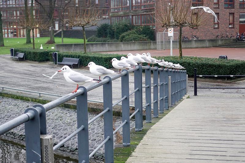 Nederland, Amsterdam, 10 januari 2018, foto; Katrien Mulder