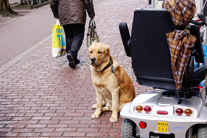 Nederland, Amsterrdam, 05-04-2018, Hulphond wacht buiten bij de scootmobiel van zijn baasje, foto: Katrien Mulder/Hollandse Hoogte
