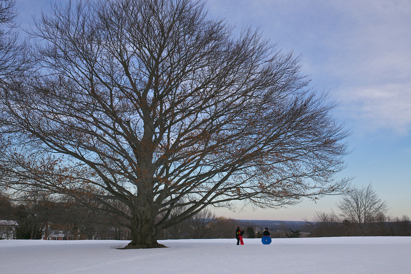 Two children beside a beech tree <br /> New Haven, CT