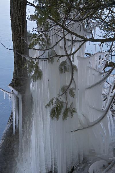 ice frozen from trees, Lake Champlain shoreline, Vermont