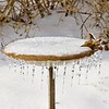 ice bird-zero F