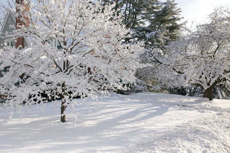 frontyard beauty<br /> Hamden, CT