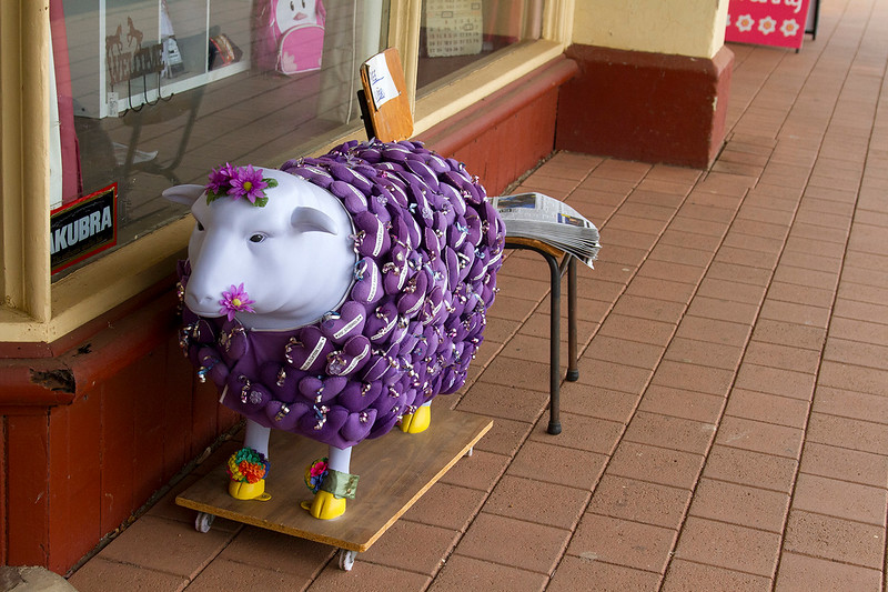 northampton sheep