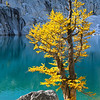 Lyell's Larch and Boulder