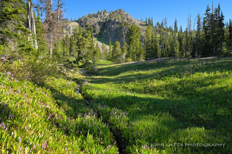 Esmeralda Basin Meadow