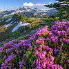 Tatoosh Range and Heather