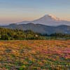 View of Mount Adams Amid Heather