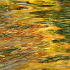 Autumn reflection in Ohanapecosh River,