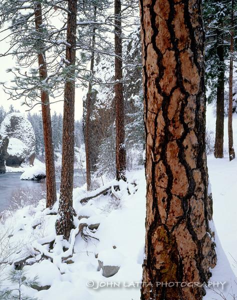 Ponderosa Pines, Spokane River