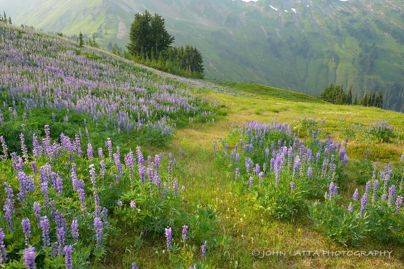 Meadows Near White Pass