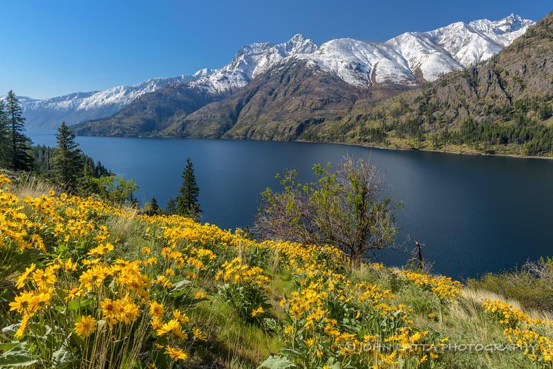 Spring Flowers Above Lake Chelan