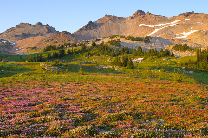 Heather Covered Meadow