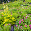 Late Summer Streamside Flower Garden, Sibley Creek