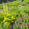 Late Summer Streamside Flower Garden, Sibley Creek