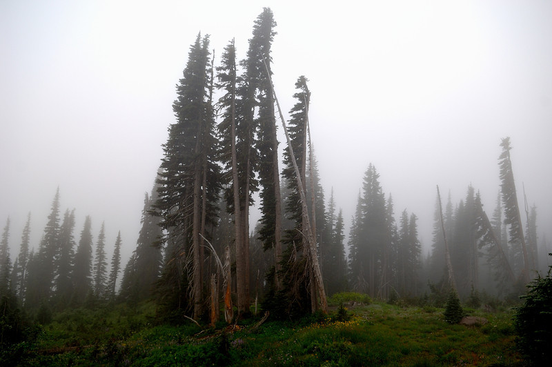 Mt Rainier National Park<br /> Photo # 30