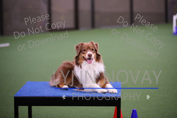 Agility League at WAGD Richardson