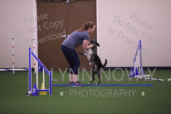 WAGD Agility League 7-21-2017