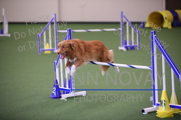 WAGD Agility League 8-11-2017