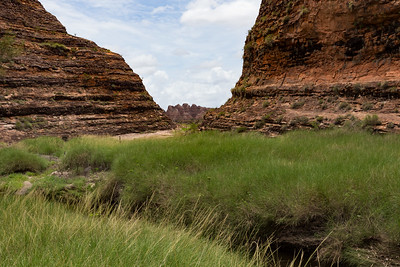 The walk into Catherdral Gorge, Purnululu, National Park