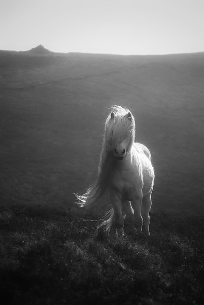 WILD PONY_BRECON BEACONS 2_SIMON REES_010102017