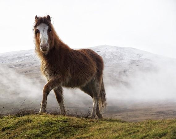 WILD HORSE_BRECON BEACONS_SIMON REES_010102017