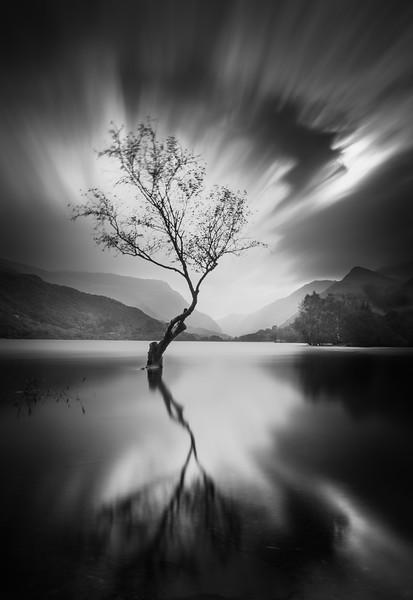 Lone Tree Llyn Padarn Llanberis Snowdonia Landscape 041112017