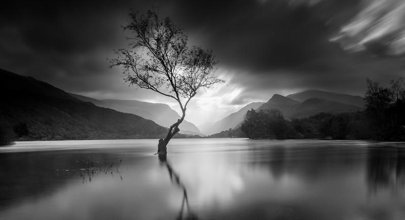 Lone Tree Lyn Padarn Llanberis 041112017