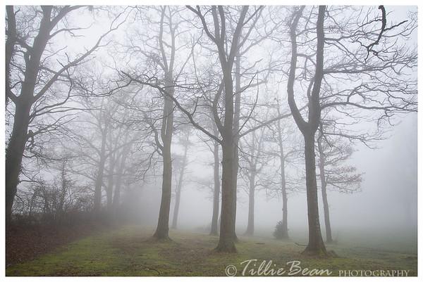 Mist in Hampshire
