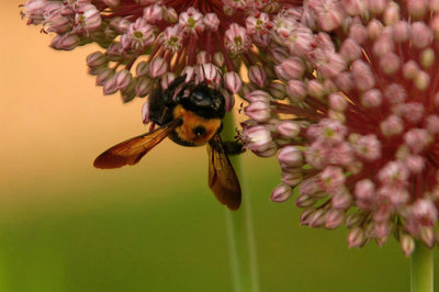 BUSY BEE!!!!!!