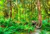 8506 Hoh Rainforest