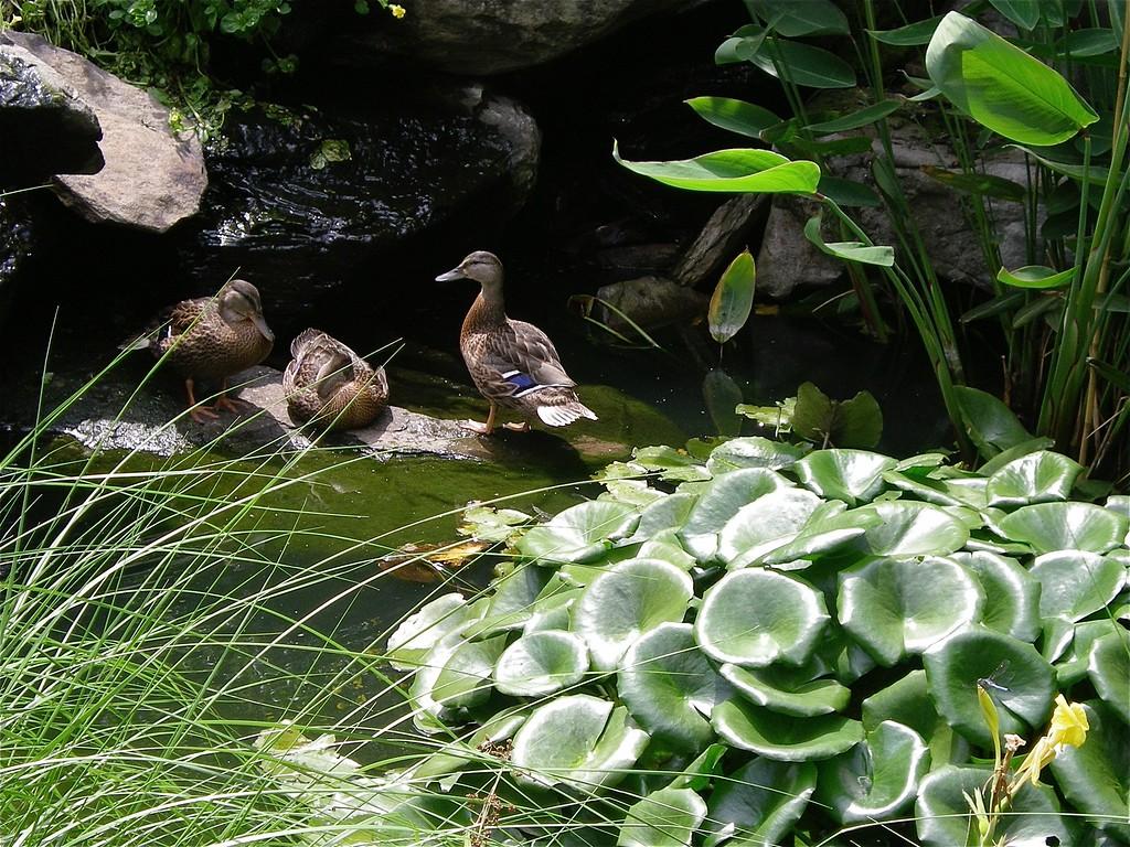 National Botanical Gardens, Washington DC 2008 Summer Vacation