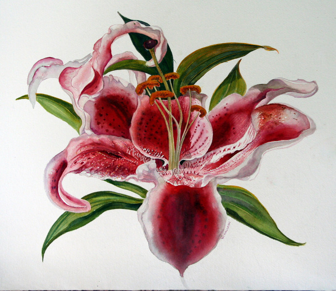 Lilies I<br /> watercolour<br /> <br /> On Display at Zwicker's Gallery, Halifax