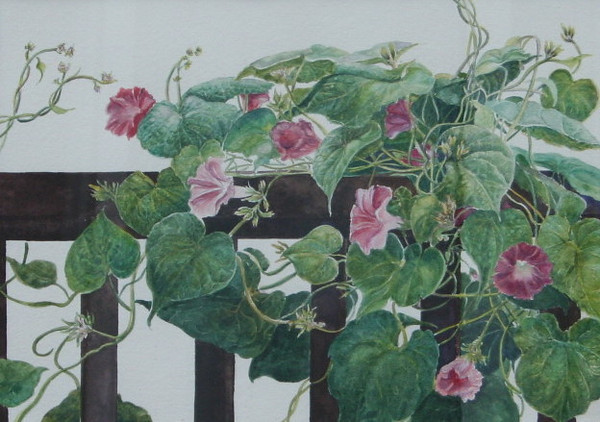 """Morning Glories""<br /> watercolour<br /> <br /> (image slightly distorted-photo taken through glass)"