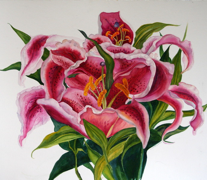Lilies II<br /> watercolour <br /> sold