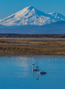 SHASTA SIGHTSEERS: WHITE LAKE, LOWER KLAMATH REFUGE, CALIFORNIA