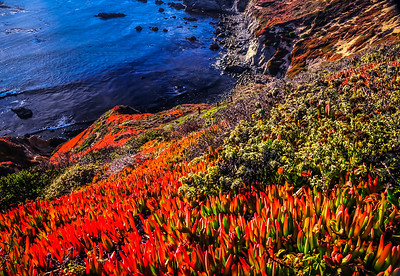 Colorful Coast