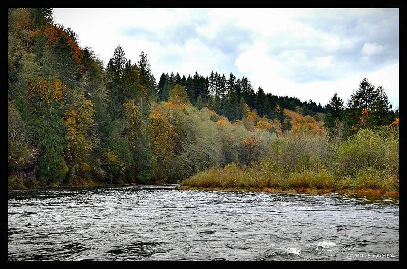 Autumn Along the Clackamas River