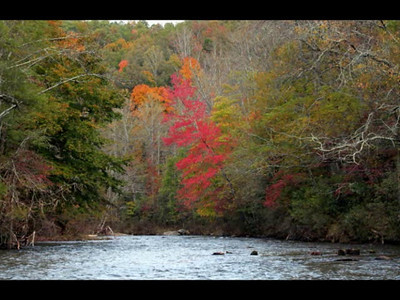 FRENCH BROAD RIVER wmv file with music!  It make take a some time to load.