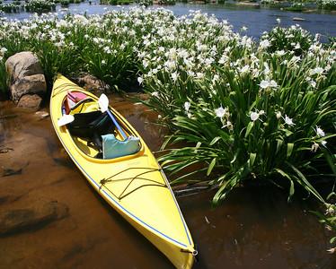 Rocky shoals spyder lillies