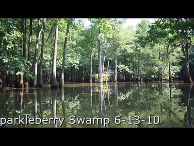 This is a good short video of a summer day in the swamp! Turn up your speakers!