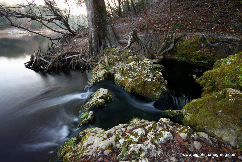 Spring at Suwannee State Park