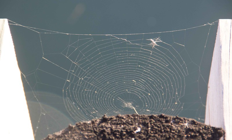 I love cobwebs. What can I say?