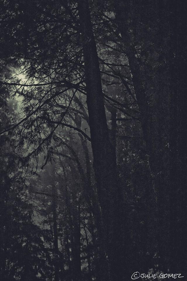 January Wolf Moon