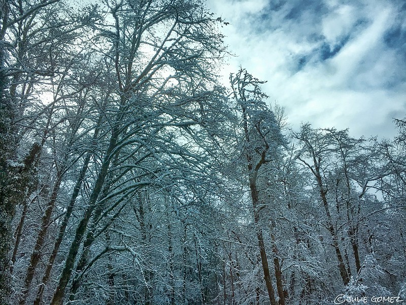 Winters Icy Breath