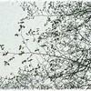 Spring Snow on Alder