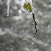 Ice, Snow, and Lichens