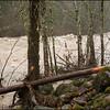 Sandy River Flood
