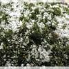 Graupel on Moss