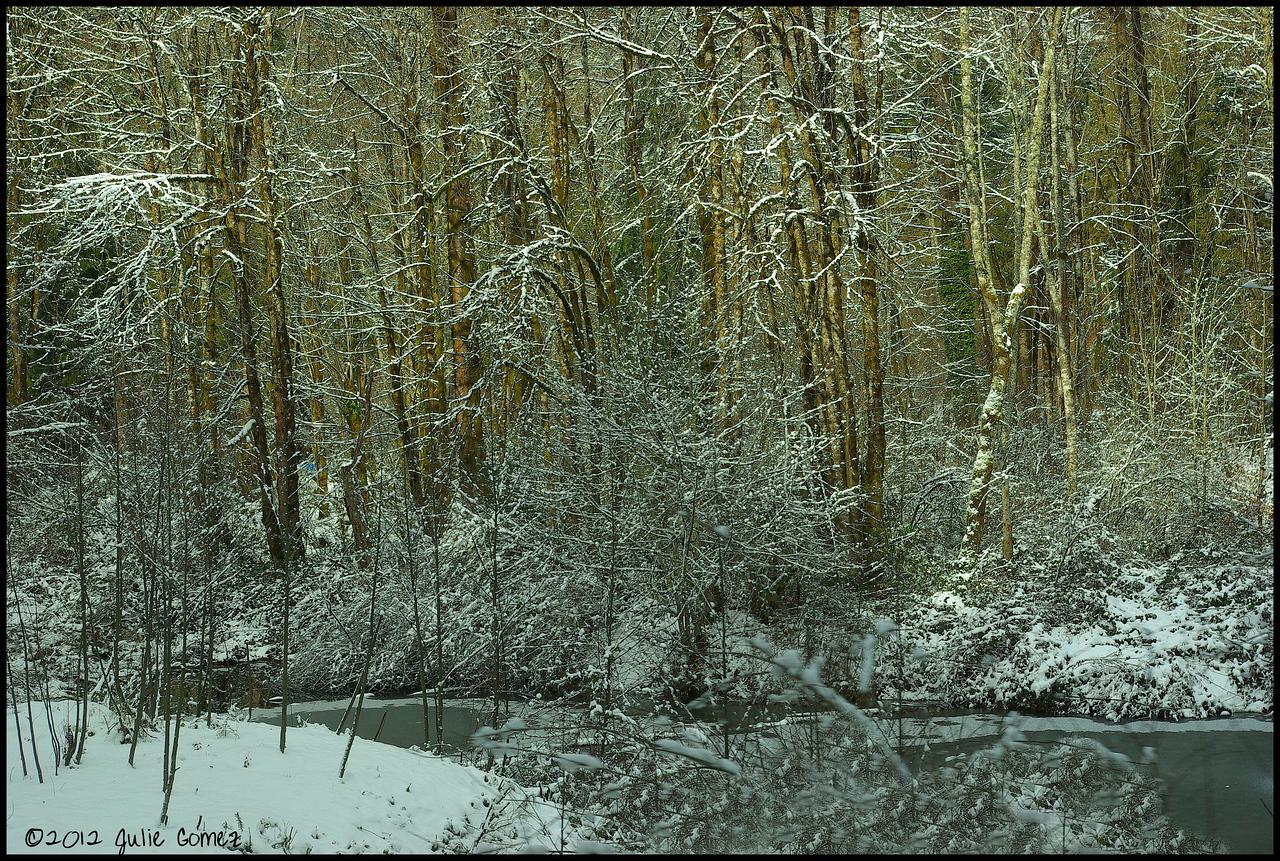 Brightwood Pond