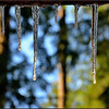 Sun-struck Icicles